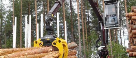 Macarale Kesla in oferta Alser Forest
